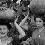 A Bologna la quinta edizione della Biennale di Fotografia dell'Industria e del Lavoro